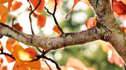 Fall Tree Picture widescreen wallpaper 1920 1080