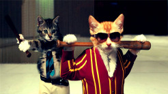 Funny Cat HD Wallpapers for Mobile
